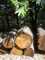 Sweet chestnut logs