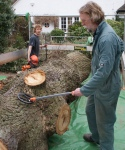 HAMpstead oak - checking for metal with detector