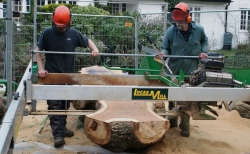 Hampstead oak - using slabber to saw across heart