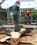 Hampstead oak - using slabber to saw limbs